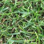 """""""Blue Grass"""""""
