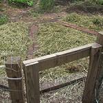 """""""Alfalfa Hay"""""""