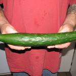 """Burpless Cucumber"""