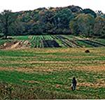 """Organic Farm In Illinois"""