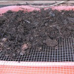 Sifting the Compost for the Garden