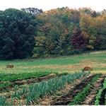 Illinois Organic Farm