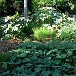 Circle Garden Summer 9
