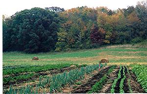 An Organic Farm