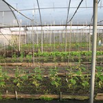 Gibbons Organic Farm