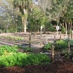 Heathcote Botanical Gardens Community Garden