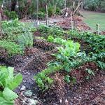 My Neighbors' Garden