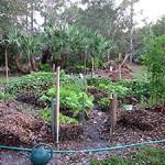 The Garden Next Door December 2009