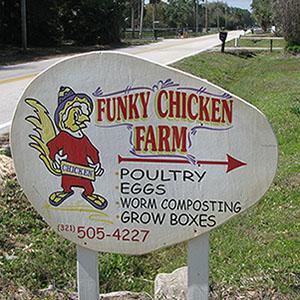 Funky Chicken Farm