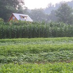 Beans, Corn Field, House