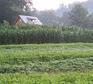 Beans, Corn Field, House