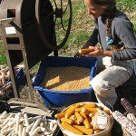 Susana Working With Corn