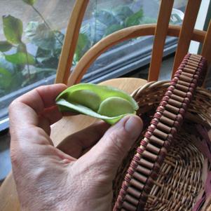 Lima Beans Shelled