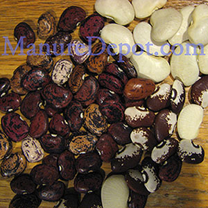 Dry Lima Bean Assortment