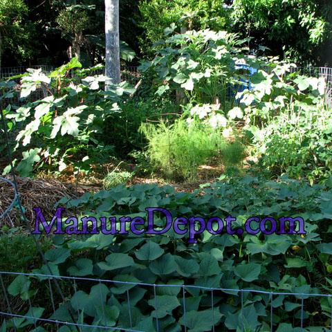 South Florida Summer Garden