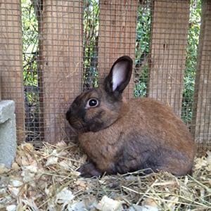 Rabbit Scrutiny