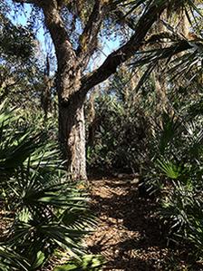 Halpatiokee Buffer Preserve: Oak